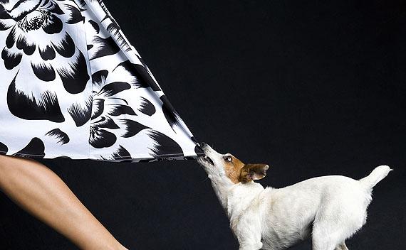 Lennette Newell: Skirt Chaser 65 x 40 cm