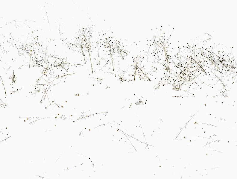 Frank Darius Untitled V (Botanik)2011, 103 x 130 cm© VG Bildkunst Bonn/ Frank Darius