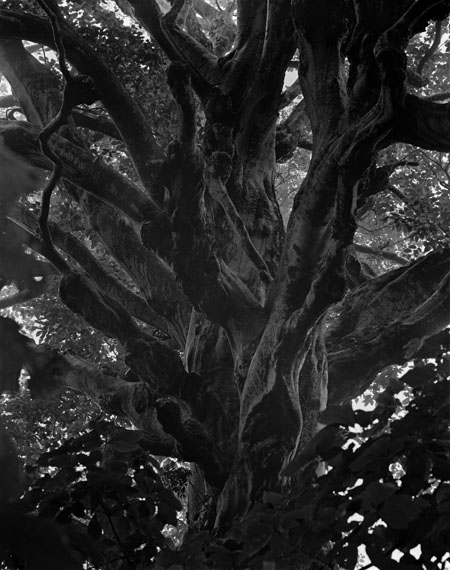 Silent Respirations of Forests, Tashirodaira 5, 2006Platinum/palladium print on Rivera. Edition of 5 and 2 artist proofs. Printed by Amana/Salto in 2 sizes : 68,3 x 54 cm & 82,8 x 65,6 cm