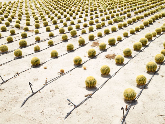 Henrik Spohler, Cactus culture in Borrego Springs, USA (Kaktuskultur) from the series / aus der Serie