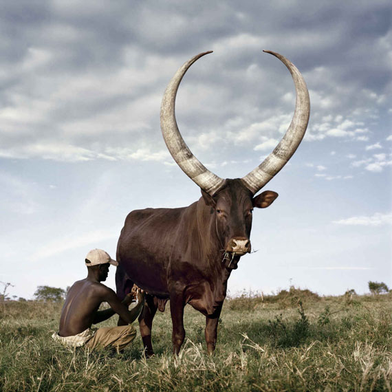 Daniel Naudé