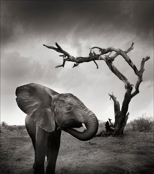 Joachim Schmeisser: Tsavo East I, Kenya 2010, 107 x 120 cm