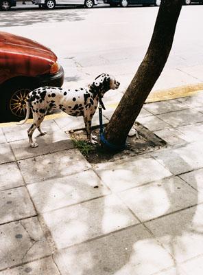 © Raymon Depardon