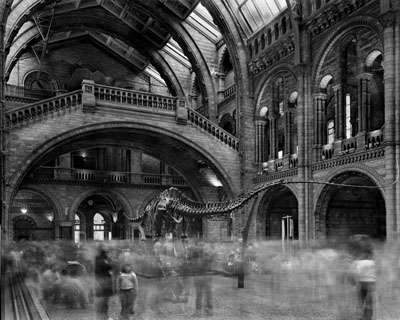 Wyoming Diplodocus. Natural History Museum, London 2007© Matthew Pillsbury