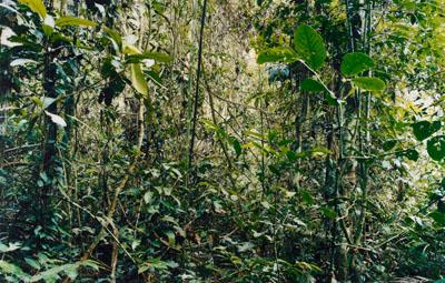 Thomas Struth. Paradise 29, Peru. 2005/2006. C-Print, 157,7 x 247,4 cm.,  Auktion Zeitgenössische Kunst und Zeitgenössische Photographie am 29. Mai 2008