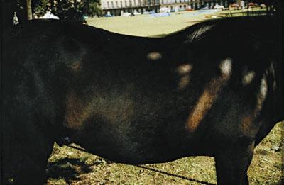 Peter Fraser, Ohne Titel, 1986, aus der Serie Towards an Absolute Zero,Pinakothek der Moderne, Siemens Arts Program, Dauerleihgabe der Siemens Aktiengesellschaft, © beim Künstler