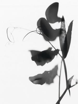 Flower Power  - Polagrams