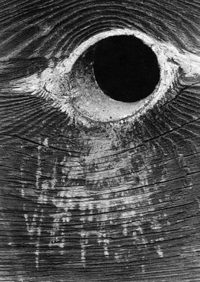 Das Auge des Allerhöchsten
