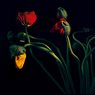 © Balthasar Burkhard, Flowers, 2009, C-Print, 129x129 cm