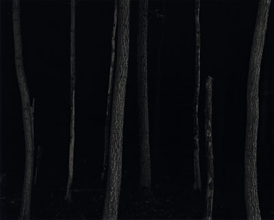 L'ours, la mort et les arbres foudroyés