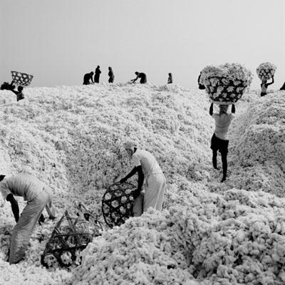 Baumwolle weltweit