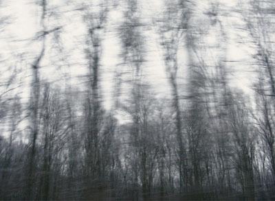 Wiener Wald, Austria 2008-2009©Ulrike Crespo