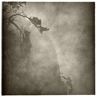 "LU Yanpeng: ""Crooked Tree"" , (2008-2010) Pigment print on rice paper, 50cm x 50cm - Edition of 10; 90cm x 90cm - Edition of 6. , © LU Yanpeng. Courtesy of m97 Gallery."