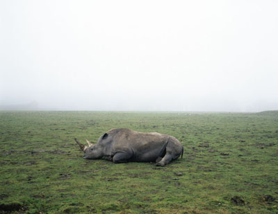 Geert Goiris, Rhino in Fog, 2003© Geert Goiris