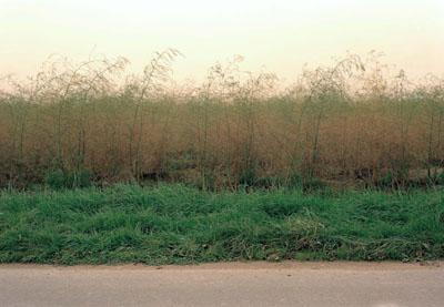 Asparagus Field, Kaarst, Rhineland, (Spargelfeld, Kaarst, Rheinland) 2003 (180 x 260 cm) © Simone Nieweg