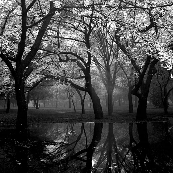 Cherry tree woods in Yoyogi Park after a spring storm, 1994, 35 x 35cm, gelatin silver, Ed. of 15© Toshio Enomoto/courtesy Micheko Galerie