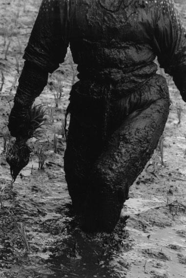 Hiroshi Hamaya, Woman planting rice, Toyama 1955