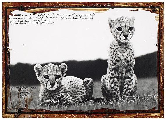 "Peter Beard""CHEETAH CUBS AT NATL PARK HDQTR MWEIGA NR. NYERI (KENYA)"". 1968Gelatin silver print,before 1999.39 x 58 cm(42,5 x 60 cm)"