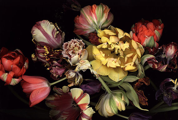 Luzia Simons Stockage 99, 2011160 x 236,5 cmScannogramm; Lightjet Print /DiasecEd. 6