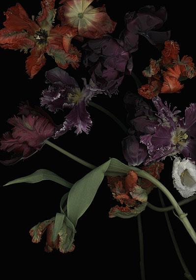 Luzia Simons  Stockage 113, 2011 180 x 126 cm Scannogramm; Lightjet Print /Diasec Ed. 5 + 1 AP