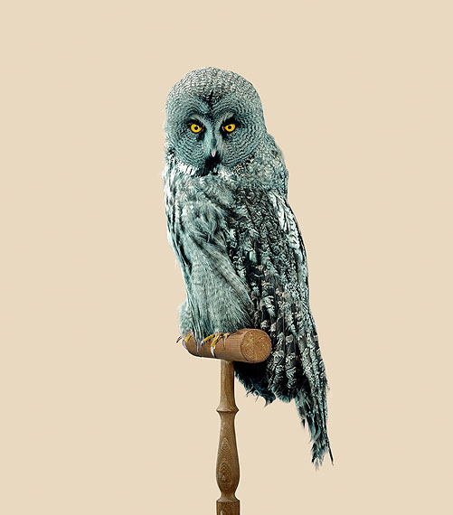 Great Grey Owl [Strix predatoris], Print size: 78,6 x 90 cm, Edition of 10, © Vincent Fournier