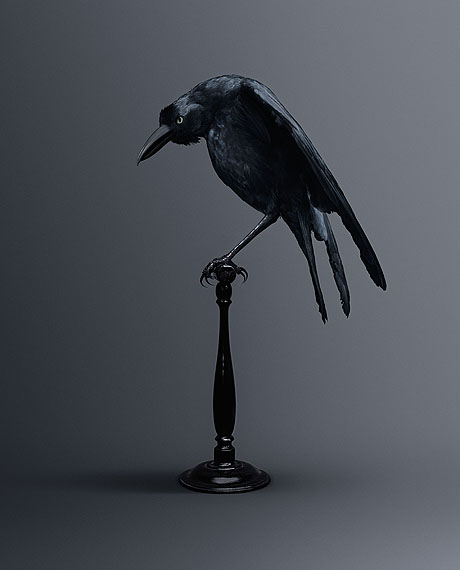 CARRION CROW [Memoria Eidética Corvus] Bird of memories © Vincent Fournier