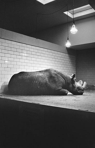 Joachim Richau: Berlin, Zoo, Nashorn, 21.10.1989