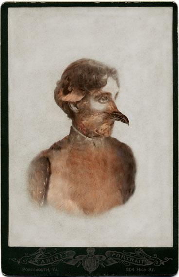 Sara Angelucci, Aviary (Female Passenger Pigeon/extinct), 2013