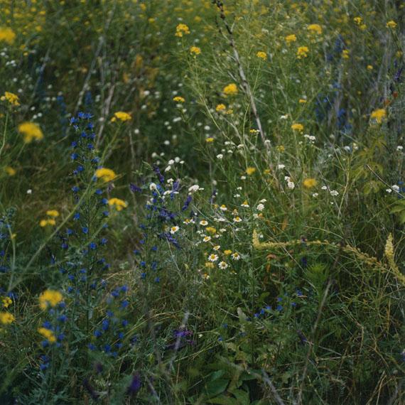 Wiese/Meadow XVI, 2011 © ANNE SCHWALBE