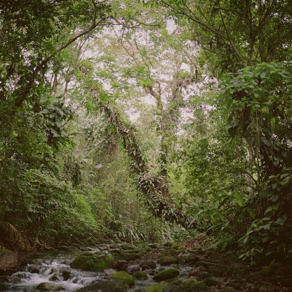 Mona Kuhn: Virgin Forest, 2009