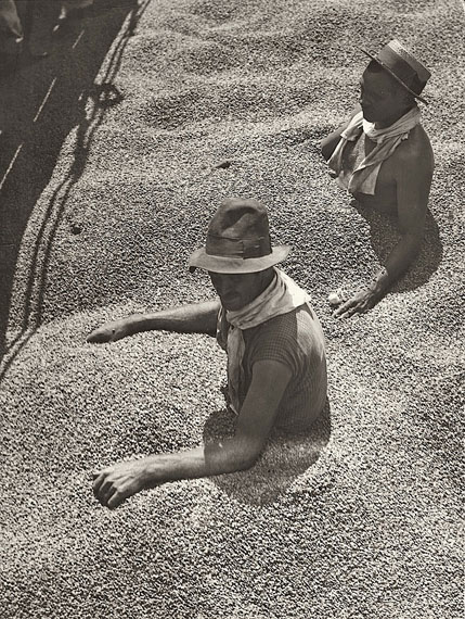 Martin MunkácsiBRASIL, CHOKED WITH COFFEE. 1932Vintage. Gelatin silver print. 11 5/8 x 8 1/2 in. (11 7/8 x 8 5/8 in.))