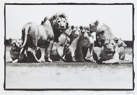 Lion pride, southern Serengeti, for the end of the game/ Last word from paradise, 1976/2000Platinum Print on Arches Paperimage 40 x 59,7  cm ( 15 3/4 x 23 1/2 in. )sheet 65 x 102 cm ( 25 5/8 x 40 1/8 in. )Edition of 15, plus 1 AP