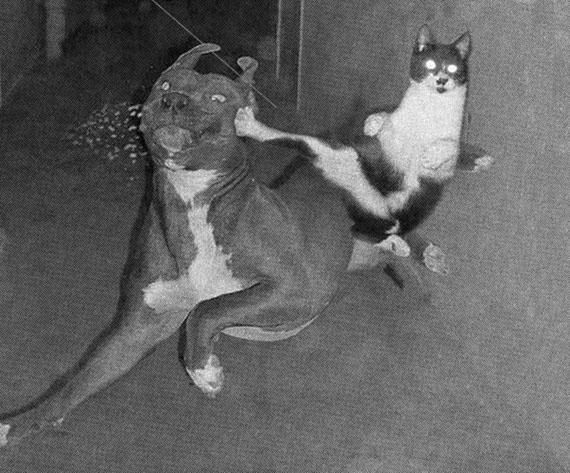 Bernhard Moosbauer: Hund und Katz