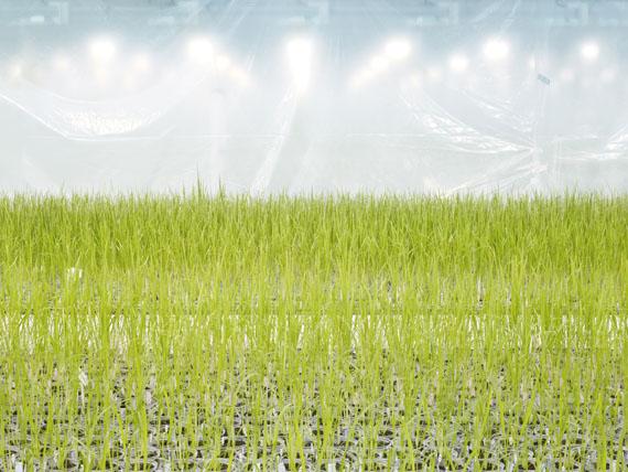 Henrik Spohler: Anlage zur Entwicklung gentechnisch veränderter Reis-Sorten, Belgien, 2011, 70 x 90 cm, Pigmentprint © Henrik Spohler