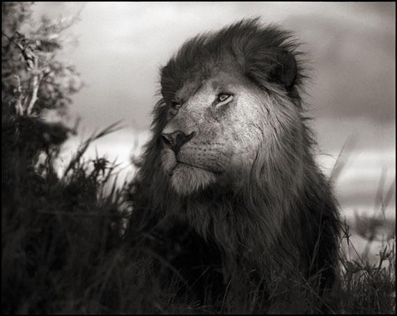 Lion in Shaft of Light · Maasai Mara · 2012 © Nick Brandt
