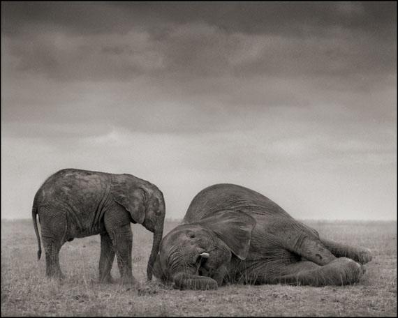 The Two Elephants · Amboseli · 2012 © Nick Brandt