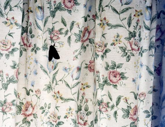 Juliane Eirich: Moth, Itoshima 2011