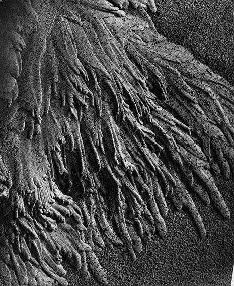 Alfred EhrhardtFließender Sand 1933-1936© bpk / Alfred Ehrhardt Stiftung