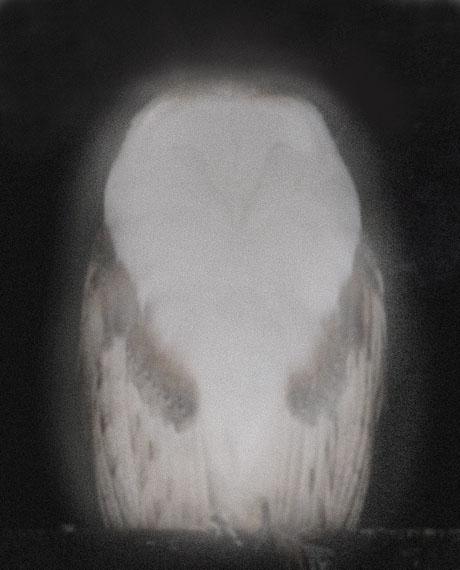 Anna VogelSmiling Barn Owl IX, 2013Pigment Print, Lack, 35 x 44 cmAuflage: 10 + 2 APEUR 980,-