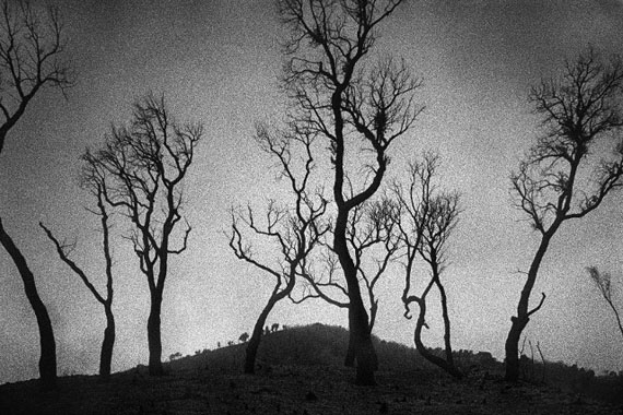 © René Groebli,  Burnt trees / verbrannte Bäume