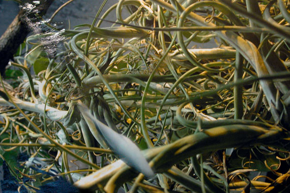 """Corinna Rosteck: """"underfish, Foto auf Metall auf Aludibond, 60x90 cm, 2010"""