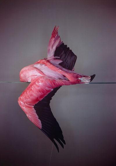 Large Flamingo, 2014© Richard LearoydUnique Camera Obscura Ilfochrome Photograph122x173cm