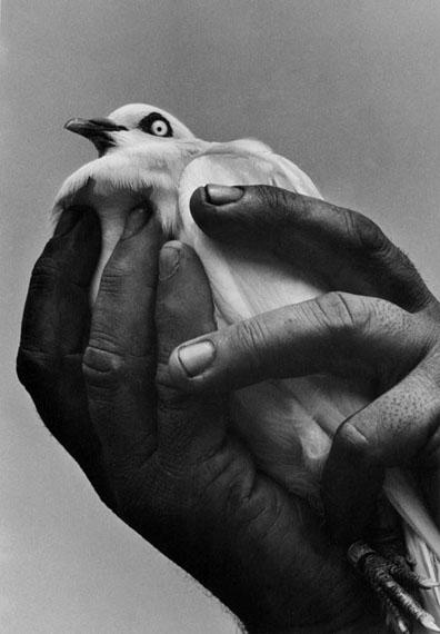 Harold Feinstein: Bird in Hand, NYC, 1955