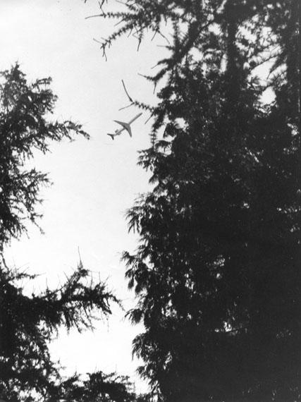 Jochen Lempert: Flugzeuge im Gymnospermenwald, 2013