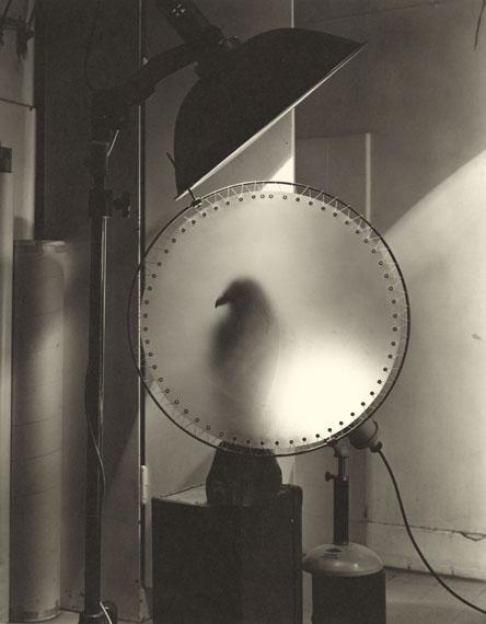 Otmar Thormann: Vogel im Studio, Stockholm 1983