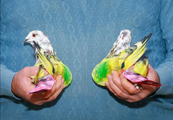 "Ricardo Cases Marín: ""Paloma al aire"" Pigment print, 50 x 75 cm, Ed. 5"