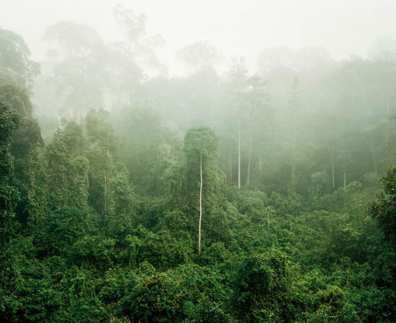 Olaf Otto Becker: Primary Forest 03, Malaysia, 10/2012