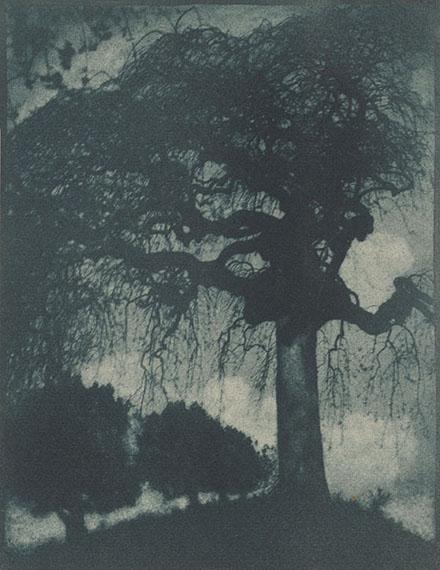 Rudolf Koppitz. ASH TREE. Circa 1912. Vintage. Bromoil transfer print. 11 ¾ x 9 1/8 in. (17 3/8 x 14 ¼ in.)