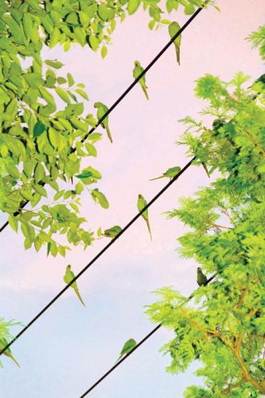 Untitled, from the series Tokyo Parrots, 2013 © Yoshinori Mizutani / Courtesy of the artist