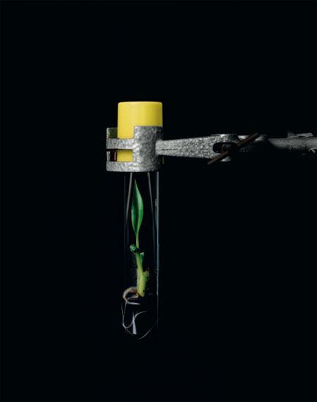 © Yann Mingard, Laboratory of Tropical Crop Improvement, Catholic University of Leuven, Belgium, 2010
